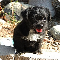 Adopt A Pet :: Madeline - La Habra Heights, CA