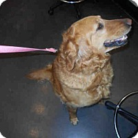 Adopt A Pet :: Missy - Denver, CO