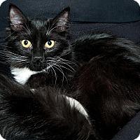 Adopt A Pet :: Kadabra - Edmonton, AB