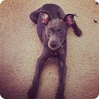 Adopt A Pet :: Anja - Hagerstown, MD