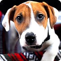Adopt A Pet :: Rhett - Detroit, MI
