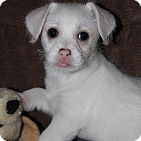 Adopt A Pet :: Lily - Grand Rapids, MI