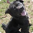 Adopt A Pet :: Willie