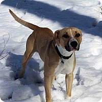 Adopt A Pet :: Tecate - Westminster, CO