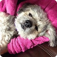 Adopt A Pet :: Angel - Windermere, FL