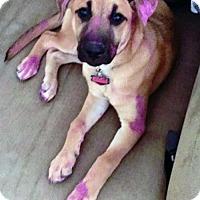 Adopt A Pet :: Cherry - Adopted! - San Diego, CA