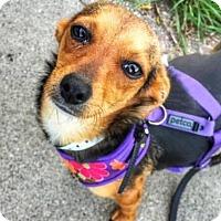 Adopt A Pet :: Moxie - San Francisco, CA