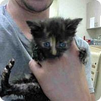 Adopt A Pet :: A272681 - Conroe, TX