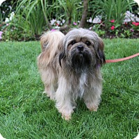 Adopt A Pet :: FINBAR - Newport Beach, CA