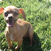 Adopt A Pet :: Tiki - Henderson, NV