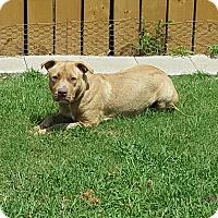 Adopt A Pet :: Nike - White Settlement, TX