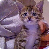Adopt A Pet :: Juniper (bonded with Annapolis) - Alexandria, VA