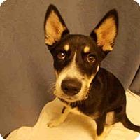 Adopt A Pet :: *BALTO - Upper Marlboro, MD