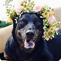 Adopt A Pet :: Judy - Princeton, MN