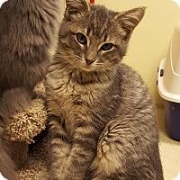 Adopt A Pet :: Cassander - Grayslake, IL