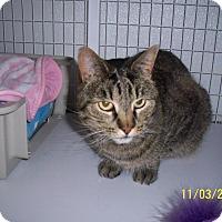 Adopt A Pet :: Luna - Gunnison, CO