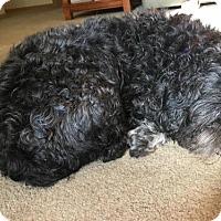 Adopt A Pet :: BoBo - PENDING - Grafton, WI