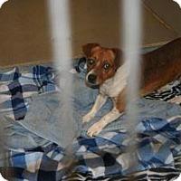 Adopt A Pet :: Bean - Wildomar, CA