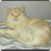 Adopt A Pet :: Gelli - Gilbert, AZ