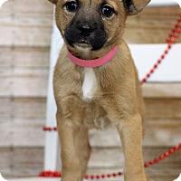 Adopt A Pet :: Bertha - Waldorf, MD