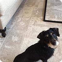 Adopt A Pet :: Libby - Elgin, IL