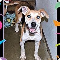 Adopt A Pet :: Jerry - San Jacinto, CA