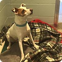 Adopt A Pet :: TURBO - Dedham, MA