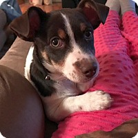 Adopt A Pet :: Kane - Knoxville, TN