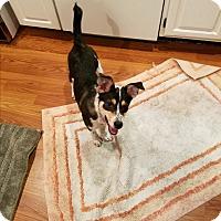 Adopt A Pet :: Sammi - CHESTERFIELD, MI