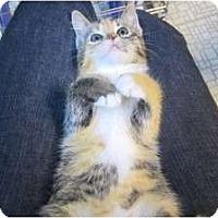 Adopt A Pet :: Anika - Sterling Hgts, MI
