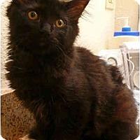 Adopt A Pet :: Nova - Davis, CA