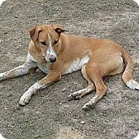 Adopt A Pet :: Sasha/Bashie/Jersey – Indian P - Hamilton, ON