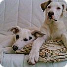 Adopt A Pet :: Omar & Valentina