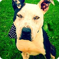Adopt A Pet :: Reno - Green Bay, WI