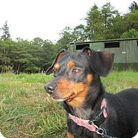 Adopt A Pet :: Lucy - Tillamook, OR