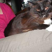 Adopt A Pet :: Reagan - Albemarle, NC