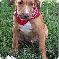 Adopt A Pet :: Stuart - Normandy, TN