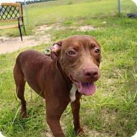 Adopt A Pet :: Nellie - Gainesville, FL