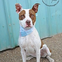 Adopt A Pet :: Petunia - Kansas City, MO