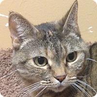 Adopt A Pet :: Sandstone - Winchester, CA