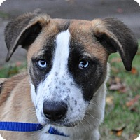 Adopt A Pet :: Faith - Atlanta, GA