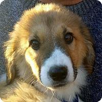 Adopt A Pet :: Zane - Staunton, VA