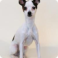Adopt A Pet :: Gizzy - Bloomington, MN