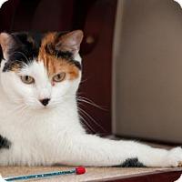 Adopt A Pet :: Pompom - Healdsburg, CA