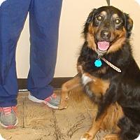Adopt A Pet :: Eva - Oviedo, FL
