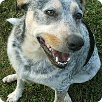 Adopt A Pet :: Jasmin - Bradenton, FL