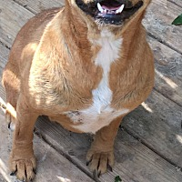 Adopt A Pet :: Trixie - Triangle, VA