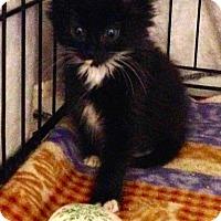 Adopt A Pet :: Archer - River Edge, NJ