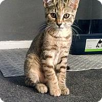 Adopt A Pet :: Apricot - Colmar, PA