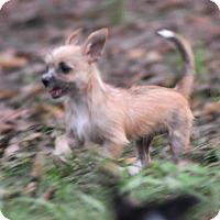 Adopt A Pet :: Deanna - Wellesley, MA